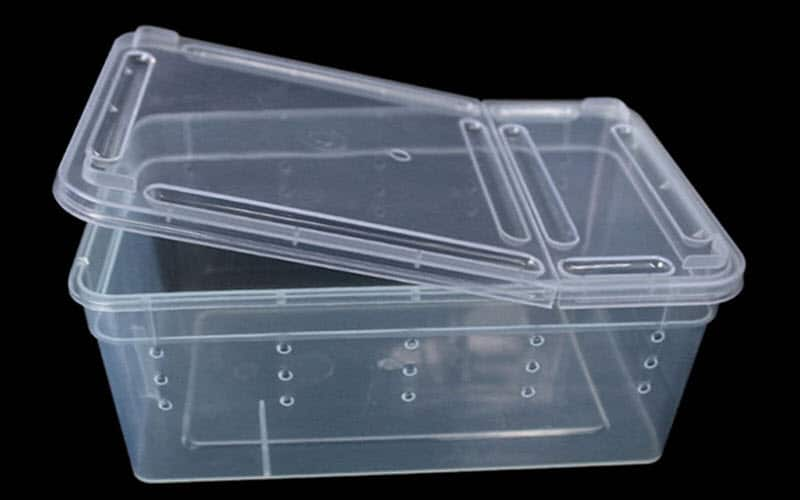Container for Spider - exopetguides.com