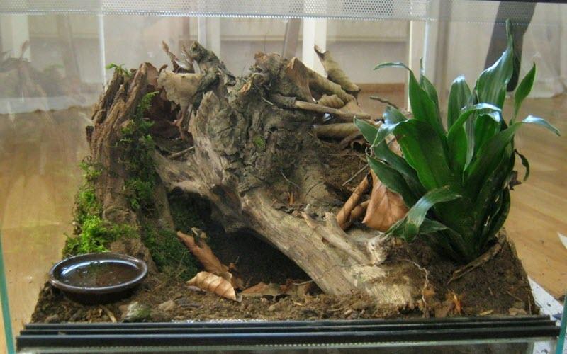 Home for Spider - exopetguides.com