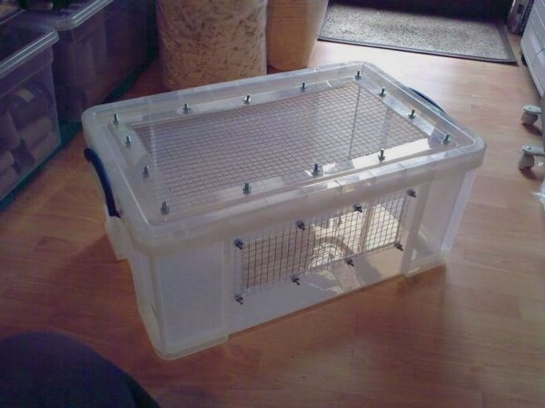 7 Essentials to set up a hedgehog cage [Hedgehog cage setup