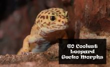 300 Cool & Cute Female and Male Bearded Dragon Names