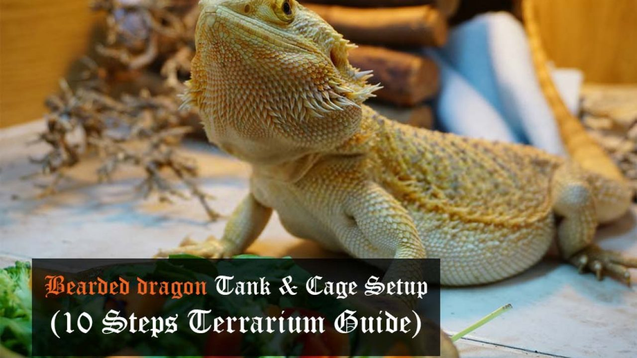 Animal Plastics Bearded Dragon – It usually eats insects, small rodents, lizards and leafy.